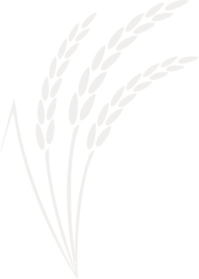 rice-1.jpg