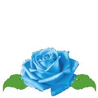 bluerose.png